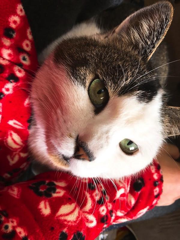 【猫】うちの猫がかわいいので写真を貼っていきます【もふもふ】
