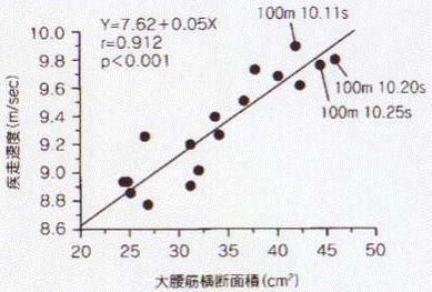 大腰筋と疾走速度の相関係数は0.912