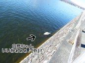 富士周辺アタック白鳥ちゃん08