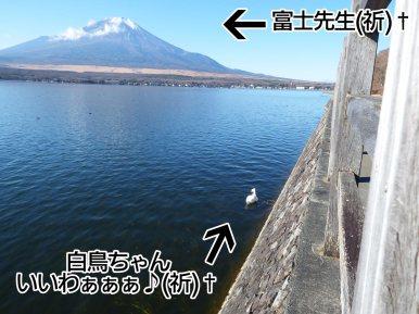 富士周辺アタック白鳥ちゃん09