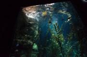 Pacific Kelp Exhibit