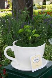 Earl Gray plant