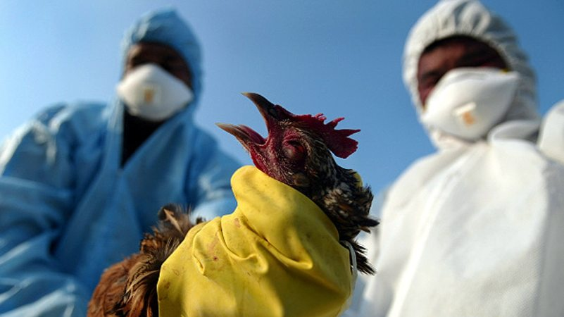 Human mortality from H5N1 Bird Flu