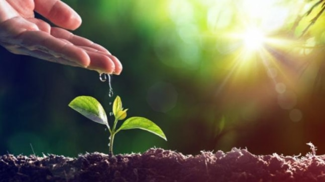 World Environment Day 2021: History, theme, significance and quotes