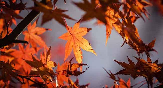Gebze gergi tavan ağaç yaprak görsellerinde beğendiğiniz görsel hd kalitede baskıya alınır, bizimle iletişime geçin.