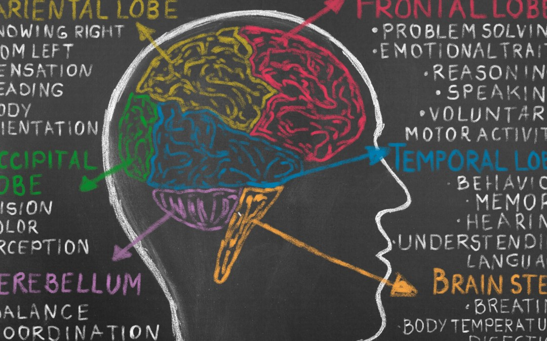 A chalkboard illustration of the brain, showing parts related to hearing and speech.