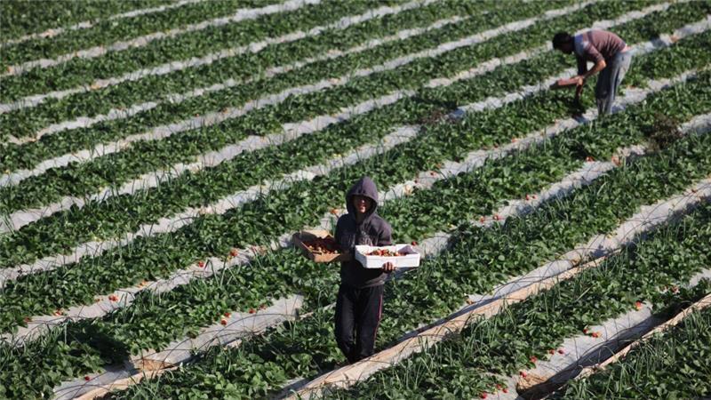 Izraelska vojska uništila je obradive površine na mnogim palestinskim farmama [Getty - Ilustracija]