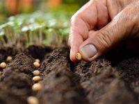Biljke – partneri u bašti: Ko se s kim slaže?