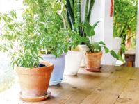 Šta treba da znate o zimskoj njezi biljaka