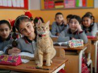 """Mačka postala redovni """"učenik"""" osnovne škole u Izmiru"""