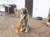 Neobično prijateljstvo kangala i mačaka