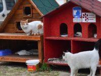 Turska: U zimskim danima 1.000 kuća za mačke i pse bez vlasnika