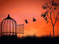 Pouke iz života u izolaciji