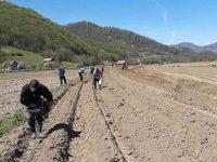 U toku sjetva na 116 hektara vakufskog zemljišta u BiH