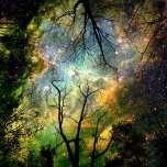 Connection to the Universe, Akosmopolite
