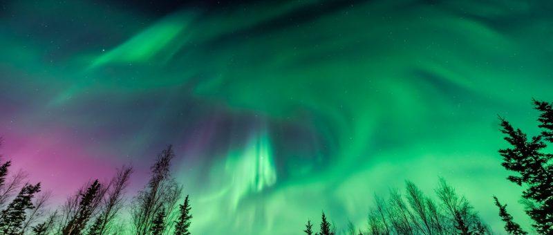 Purple and green Aurora borealis over tree line