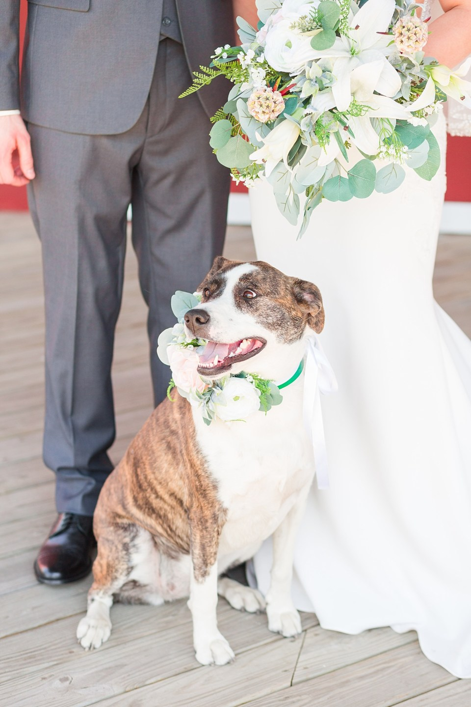 A brown and white dog with a floral collar poses with the bride and groom