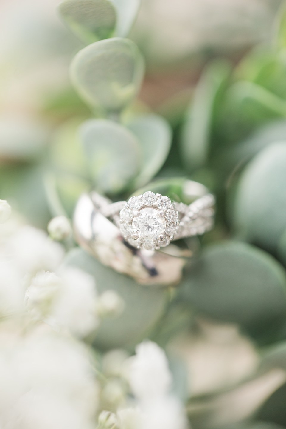 A halo wedding ring with a silver band rest on soft greenery