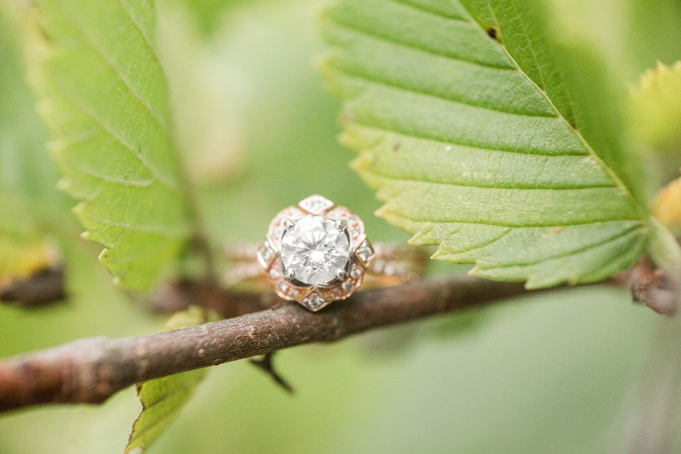 An engagement ring sits on a branch in Buffalo River State Park