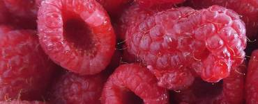 Akram's Ideas: Fresh Raspberry Puree