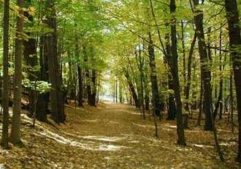 Προπόνηση στο δασάκι της Βυτίνας