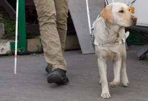 Service animals especially come with a variety of benefits and help in many ways. They give a blind person more confidence, friendship, and security. Blind people who use service animals have increased confidence in going about day-to-day life and are comforted by a constant friend.