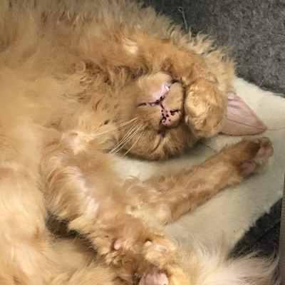 Mecky in einer Schlafhöhle, ziemlich verknotet, eine Pfote verdeckt halb das Gesicht und die Augen