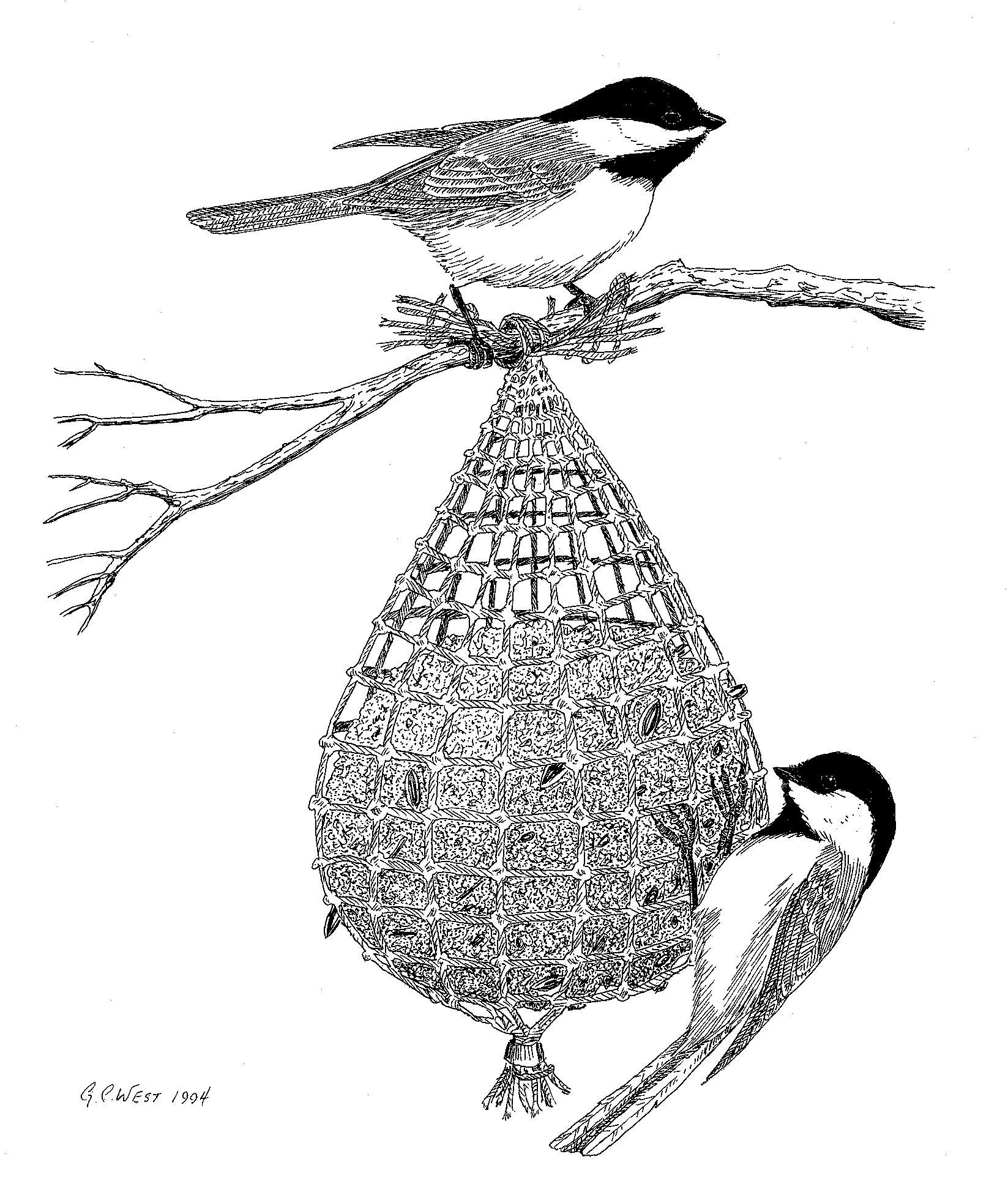 Bird Feeding in Alaska