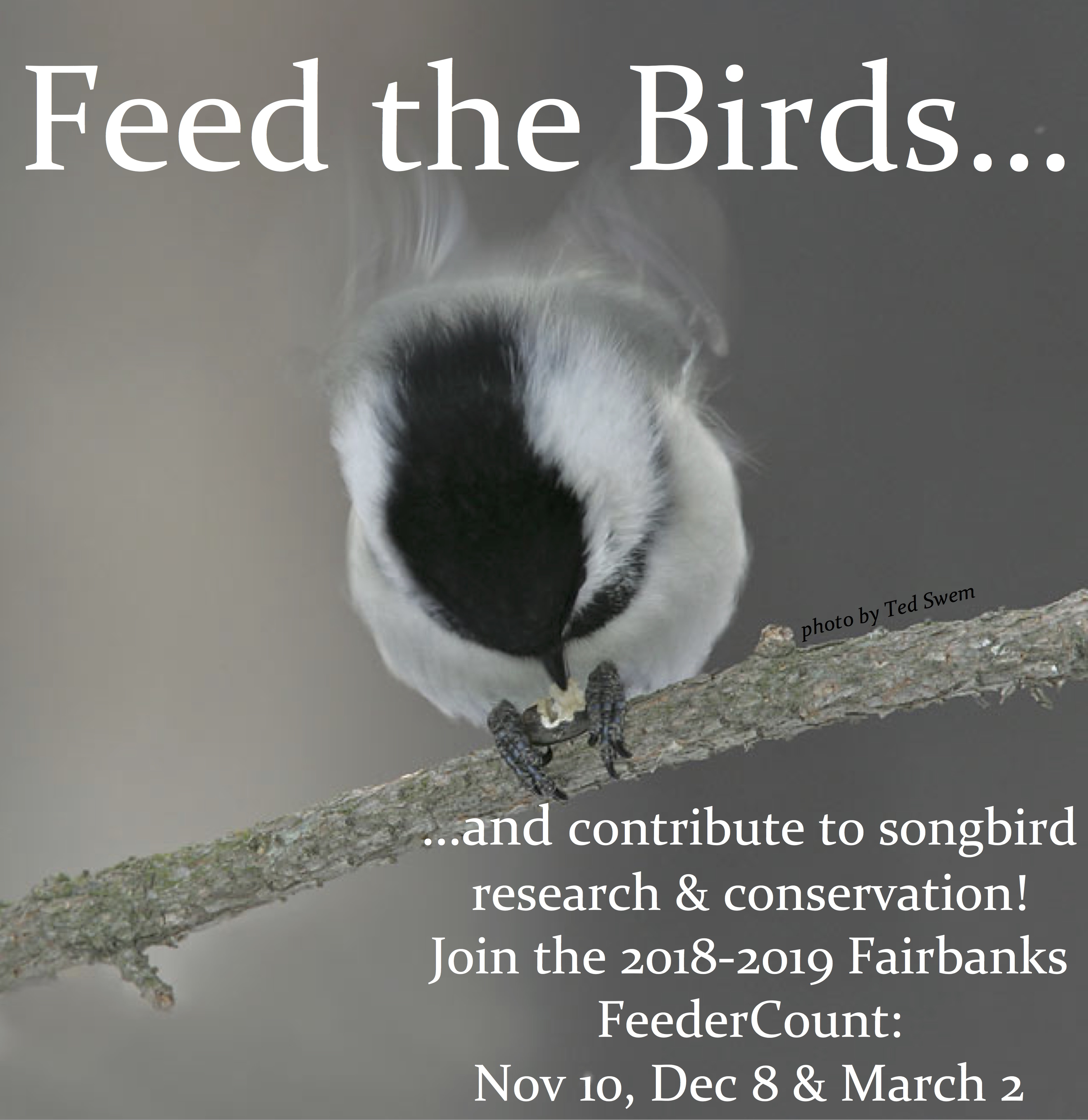 dating site for feeders