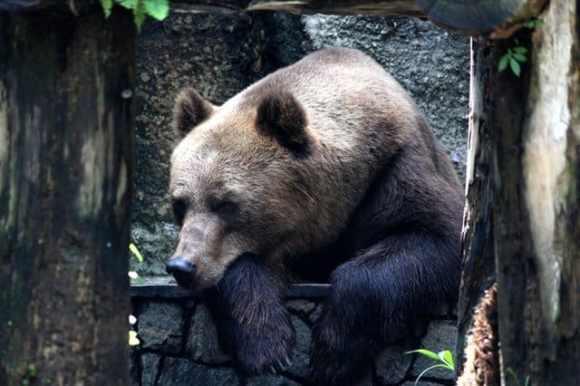 bearish marknad
