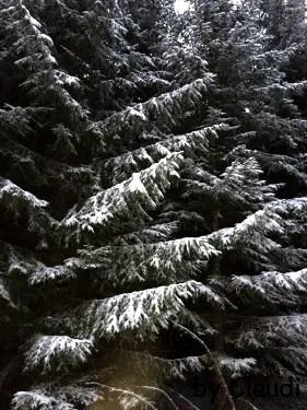 Prächtige Bäume in weißem Kleid