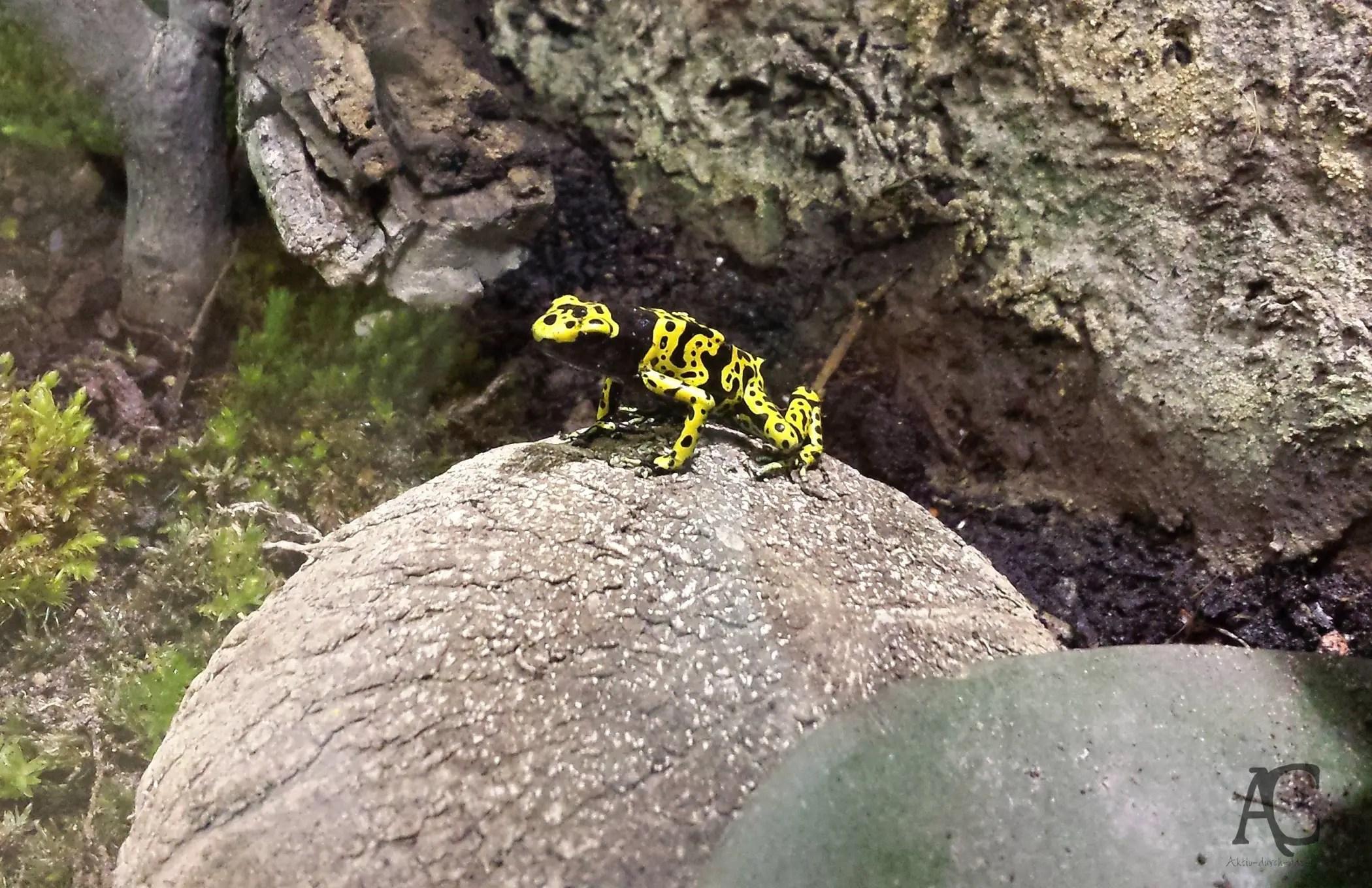 Schwarz-gelb ist ja eigentlich wirklich nicht meine Farbe, aber hier an diesem possierlichen Tier gefällt mit die Kombination :D