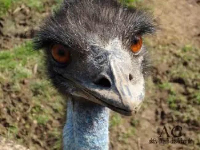 Das Emu...