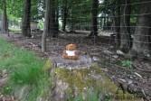 Unser Aktiv-Teddy im Wildpark