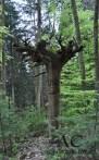 ... und verzauberte Bäume