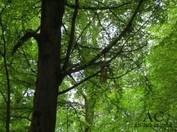 Ein Windspiel im Baum :-)