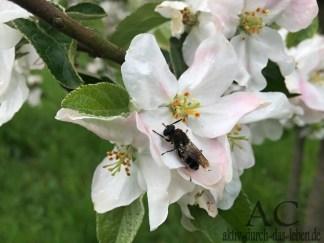 Ein nasses Insekt trocknet sich auf der Blüte.