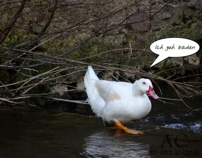 Abkühlung tierische abkühlung eine bildergeschichte aktiv durch das leben de
