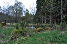 Hochmoor bei Hattgenstein im Nationalpark Husnrück-Hochwald