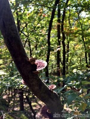 Ein Baumpilz