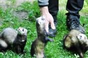Tierpark Kunsterspring Neuruppin