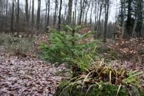 Totes Holz lebt