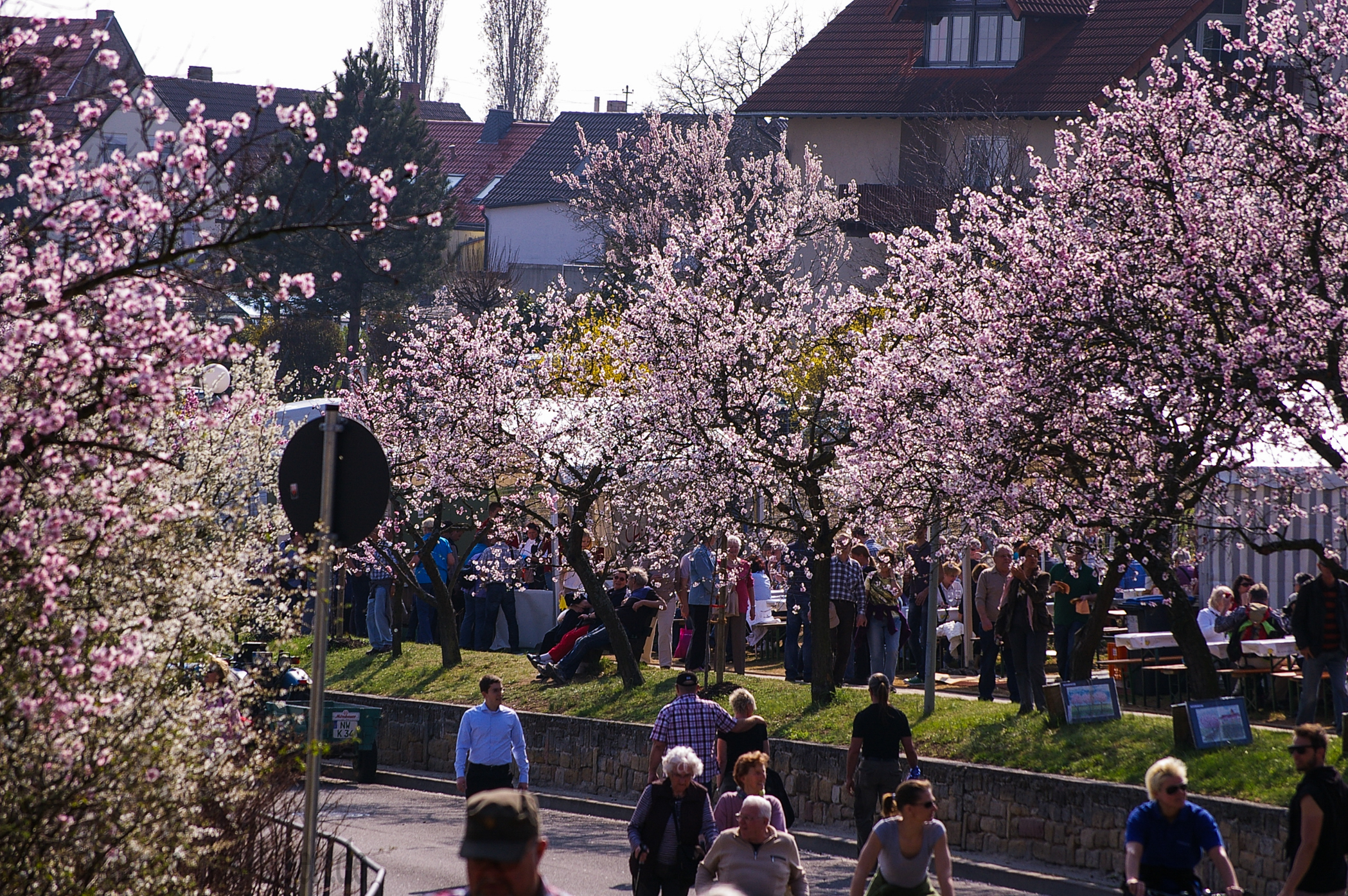 Mandelblütenfest 2012