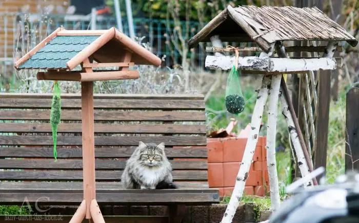 Katze vs. Vögel