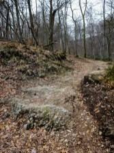 Schöne Waldwege dürfen wir gehen.