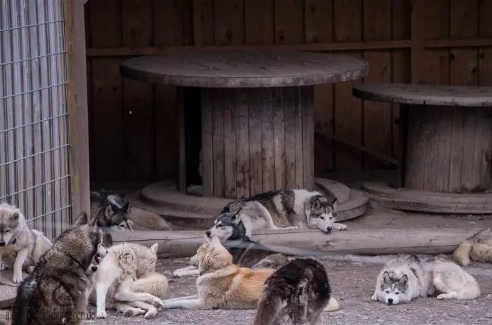 Kindergeburtstag im Tiererlebnispark Bell