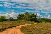 Der rote Sand in der Mehlinger Heide