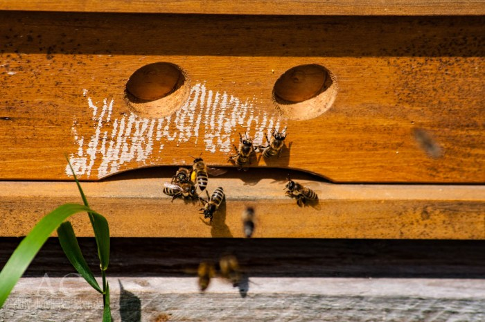 mannebach energie und naturpfad bienenstock