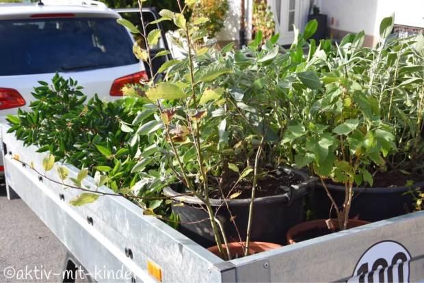 Pflanzen auf Anhänger