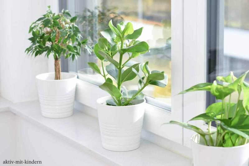 Dekorative Zimmerpflanzen